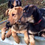 Kath - Trevor, Bella & Lottie
